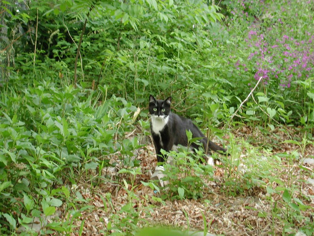 05172001pookieDSCN2822 Tess Heder's Tuxedo Cat Pookie Loopiter