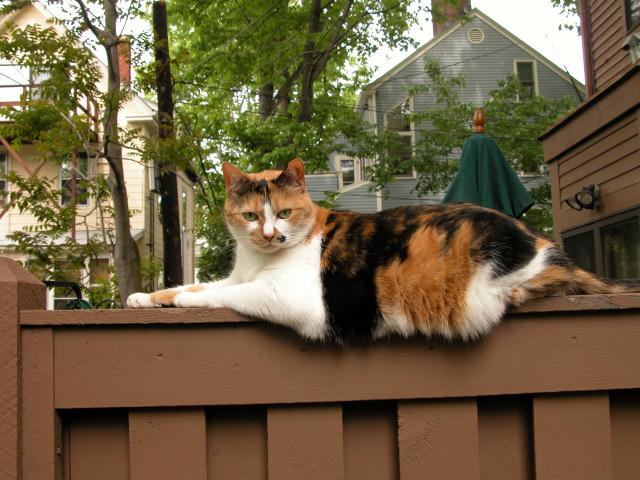 07312003DSCN6116 Tess Heder's Calico Queen Cat